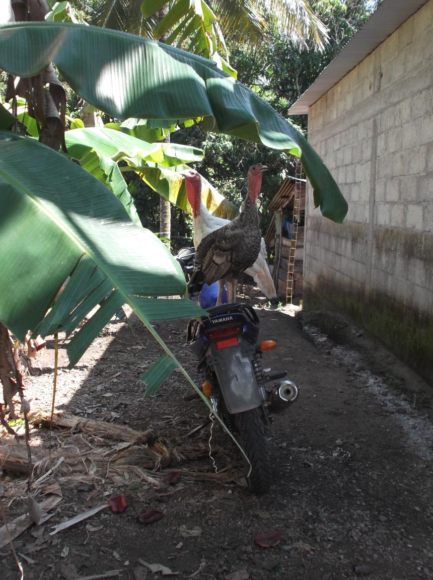 Pavos y motos