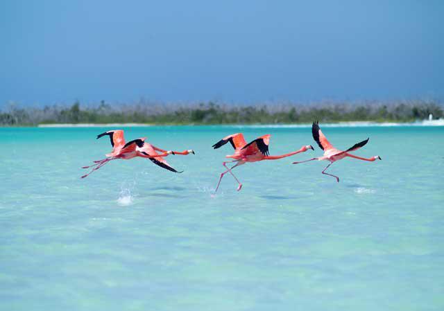 Flamencos en Río Lagartos -  una de las  mejores cosas que hacer en yucatan