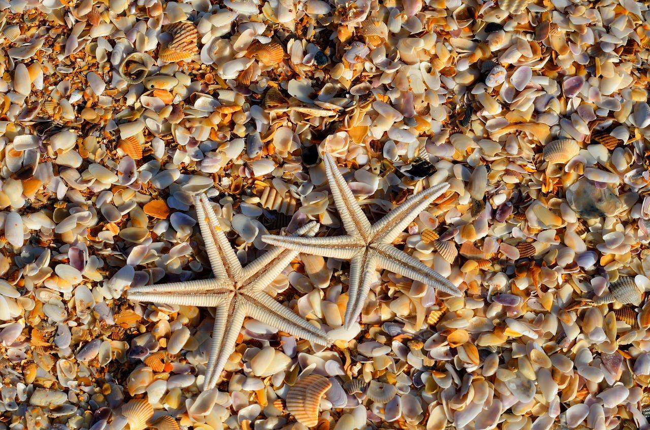 vida marina en el turismo responsable