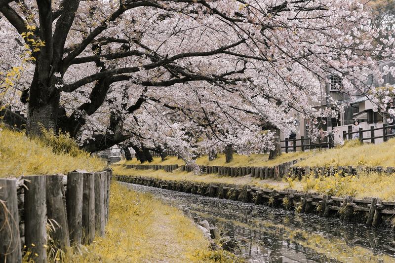 Paisajes de Japón